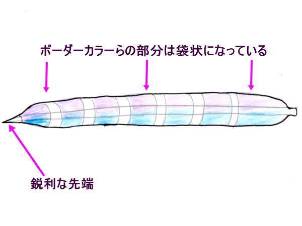 イイジマフクロウニの棘