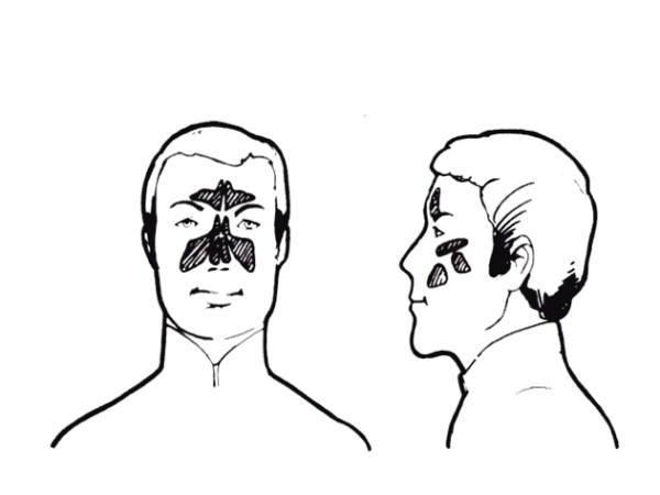 サイナス,副鼻腔