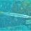 10月でも夏の海 ダイビング後はネイラカマスフライで腹いっぱい 585