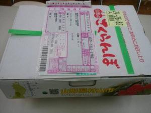 サクランボ 佐藤錦 笹原農園