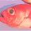 トロキンメが食べたい、トロキンメとキンメダイの違い 992