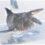 タイドプールで初めて見つけた魚 関東では珍しいツバメコノシロ 1066
