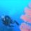 慶良間諸島2年ぶり嘉比島と安慶名敷島でダイビング 1071