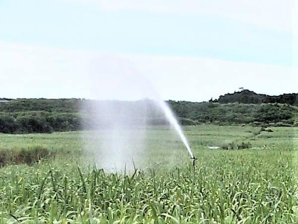 サトウキビ畑 スピリンクラー 散水